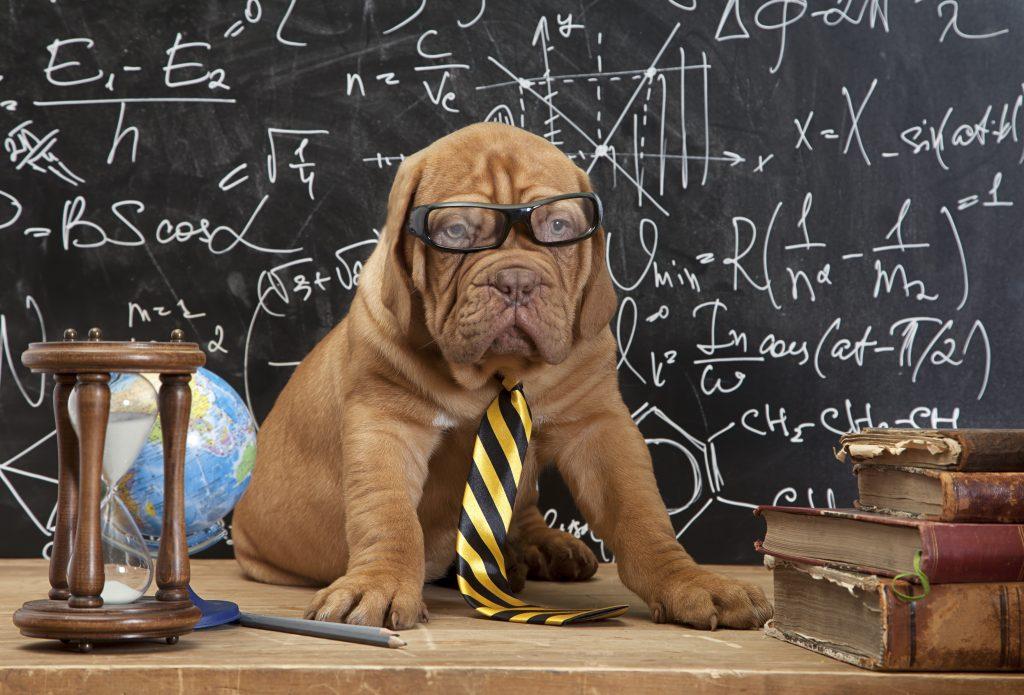 """Cómo afecta la """"vuelta al cole"""" a nuestras mascotas? - El Dogtor"""