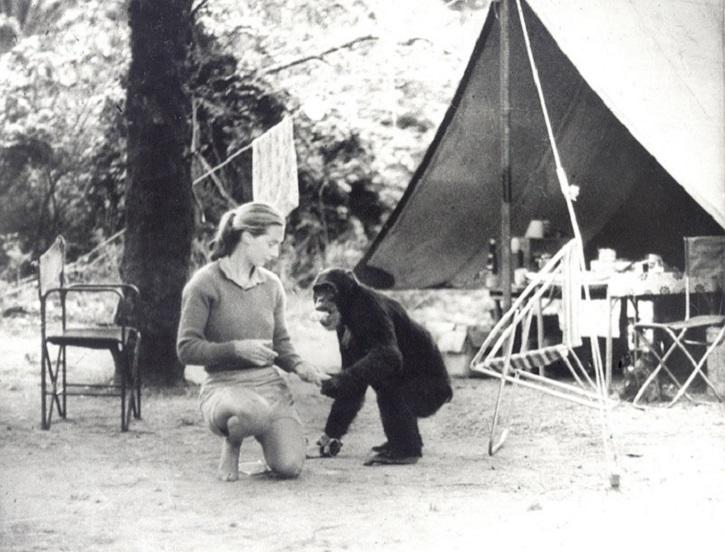 La exitosa primatóloga Jane Goodall | 'El viaje de Jane': Documental de la primatóloga Jane Goodall
