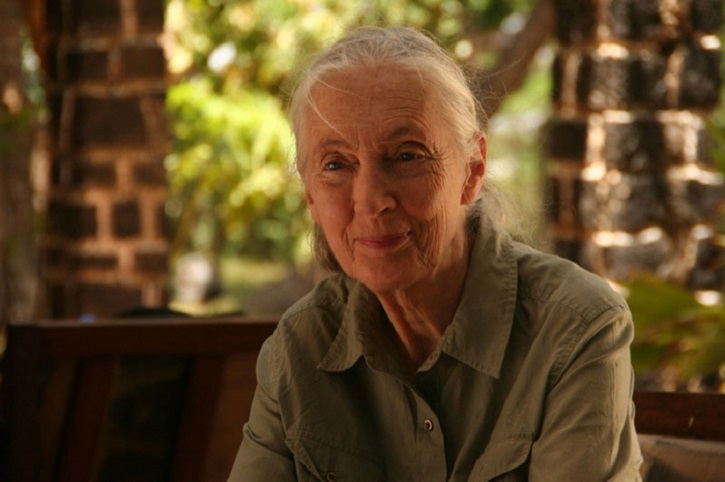 Fotograma del documental | 'El viaje de Jane': Documental de la primatóloga Jane Goodall