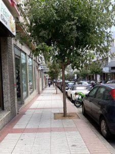 Unos finos árboles alivian la densidad urbanística de la calle