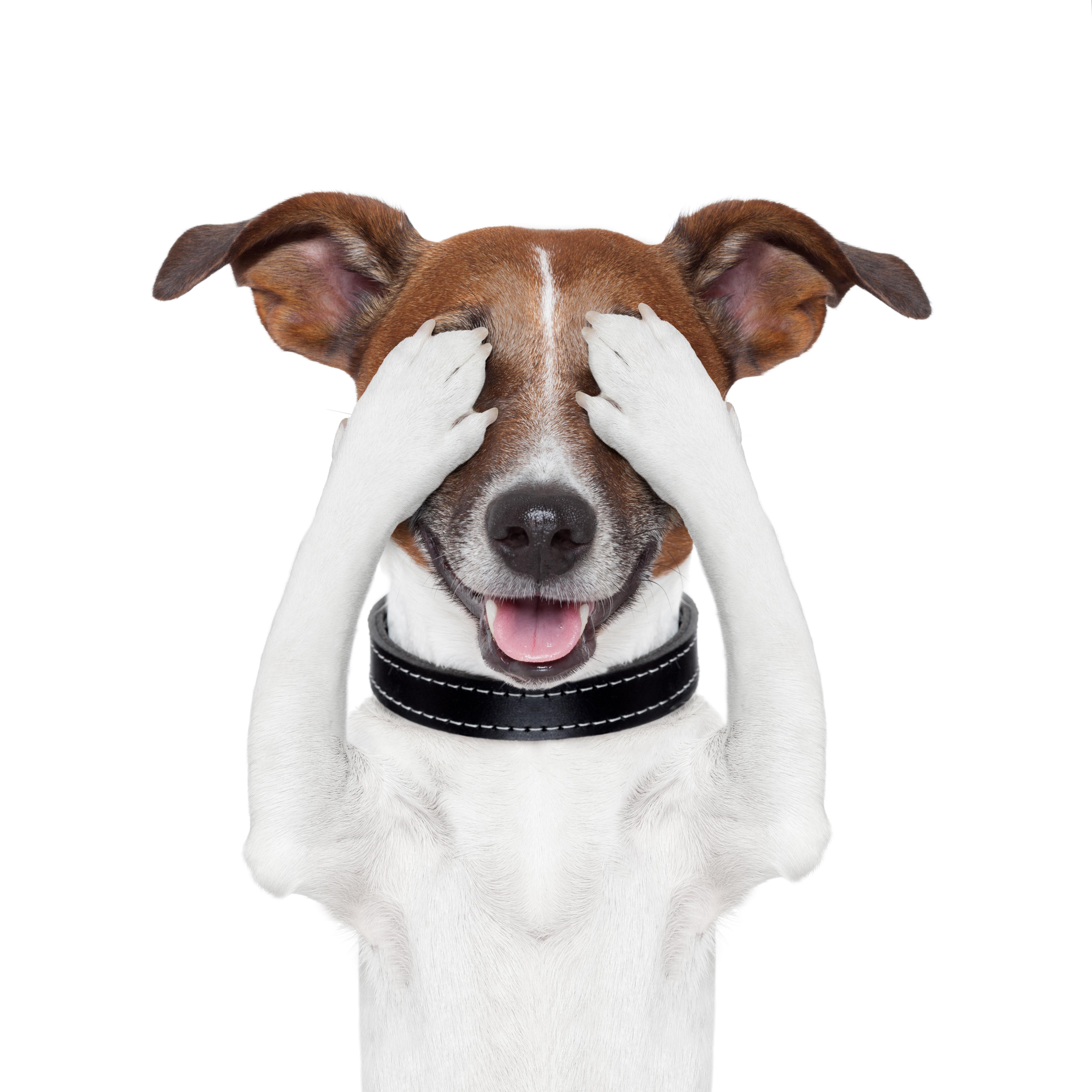 Adoptar a un cachorrito sordo y ciego: ¿y por qué no?