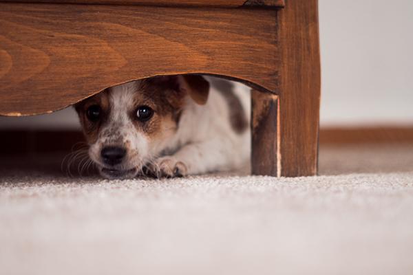 Nochevieja: cómo calmar a tu perro en época de petardos